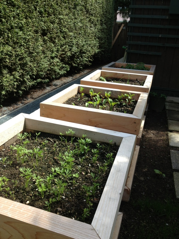 Experimenting with my first veggie garden this year. Carrots, beets, heirloom tomatoes and green onions.
